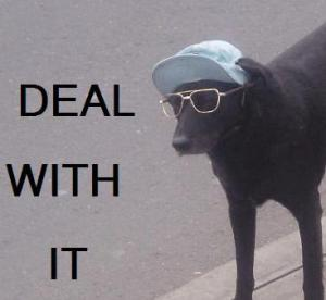 deal with it dog