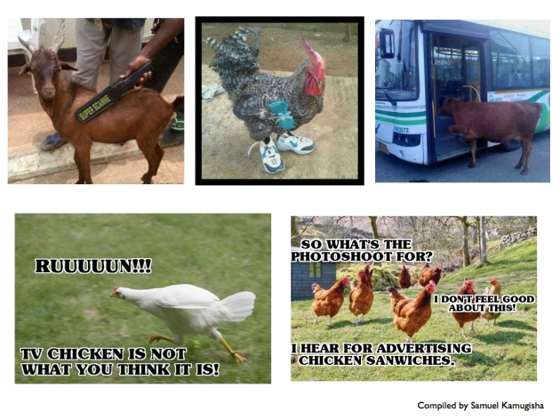 Different humorous chicken and goat memes found on the Ugandan web. Images compiled by Samuel Kamugisha.