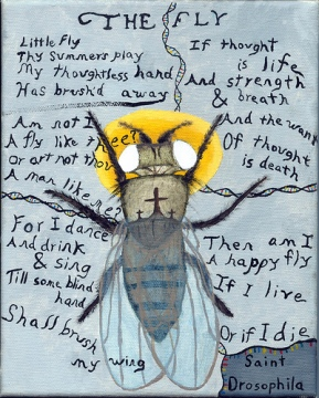 "Drawing of fruit fly with text from William Blake's poem ""The Fly"""